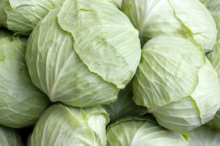 0614_cabbage011